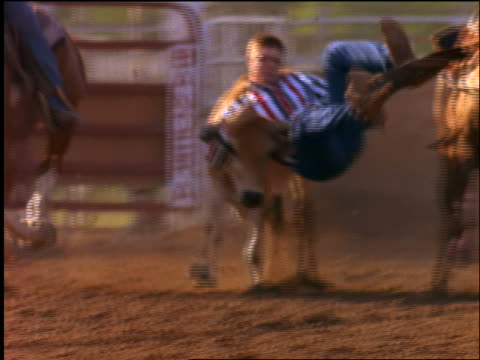 slow motion rodeo rider jumping off horse + wrestling steer to ground - pflanzenfressend stock-videos und b-roll-filmmaterial