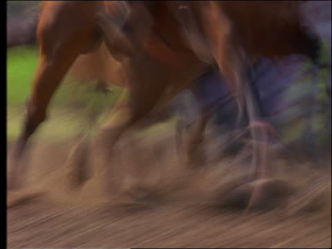 slow motion rodeo rider jumping off horse + wrestling steer to the ground - pflanzenfressend stock-videos und b-roll-filmmaterial