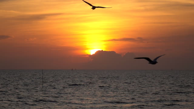 Slow Motion Seagulls Flying Above Sea At Sunset