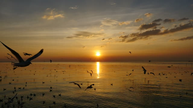 Slow Motion Seagulls Flying Above Sea At Sunset.