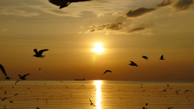 slow motion seagulls flying above sea at sunset. - sea water bird stock videos & royalty-free footage