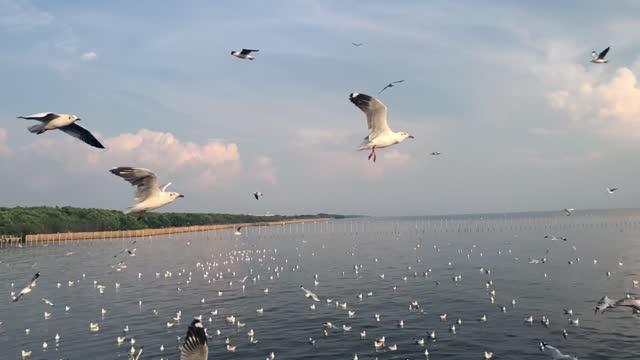 slow motion, seagulls flying in the sea wind, bang pu, samut prakan, thailand - sea water bird stock videos & royalty-free footage