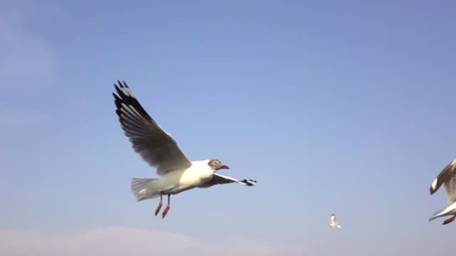 slow motion seagulls flying - flapping wings stock videos & royalty-free footage