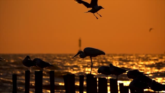 slow motion seagulls in the evening light,flying - seagull stock videos & royalty-free footage