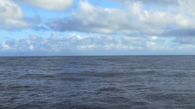 slow motion: shark fins appearing and disappearing in ocean water, kauai, hawaii - ひれ点の映像素材/bロール