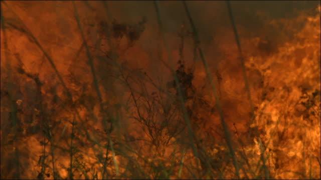 Slow motion shot of a blazing bush fire.