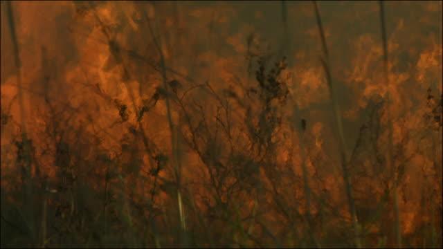 slow motion shot of a blazing bush fire. - hd format stock videos & royalty-free footage