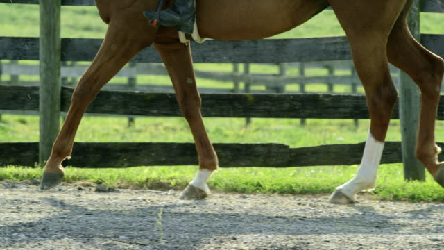 slow motion shot of a brown horses feet (with a rider) as it walks along a dirt road next to a wooden fence with green pasture in the background on a sunny day - recreational horseback riding stock videos & royalty-free footage