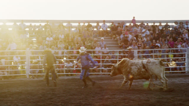 slow motion shot of a bul rider competing in a bull riding event before being thrown from the bull's back while the rodeo clown distracts the bull in a stadium full of people at sunset - wild west stock videos & royalty-free footage
