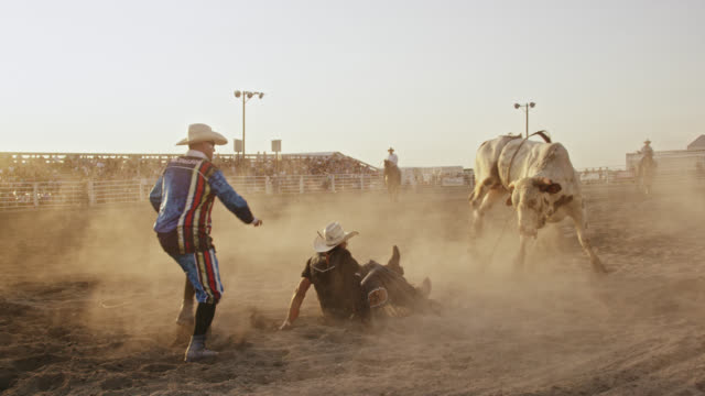 slow motion shot of a bull rider competing in a bull riding event before being thrown from the bull's back while the rodeo clown distracts the bull in a stadium full of people at sunset - rodeo stock videos & royalty-free footage