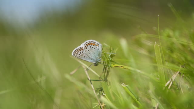 slow motion shot of a butterfly in a field - butterfly insect stock videos & royalty-free footage