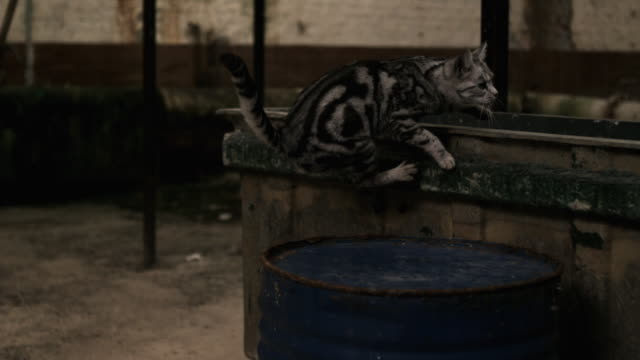 Slow motion shot of a cat jumping up onto a low wall in a warehouse.