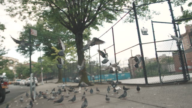 vídeos de stock, filmes e b-roll de a slow motion shot of a flock of pigeons taking flight at a new york city subway station - williamsburg new york