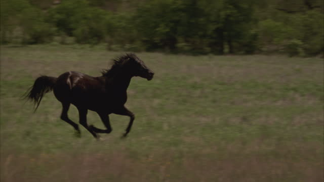 slow motion shot of a horse galloping past blowing smoke. - black colour stock videos & royalty-free footage