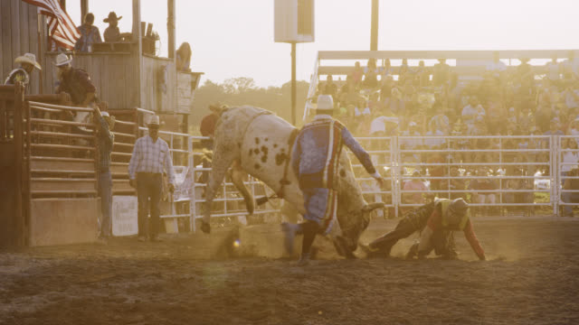 slow motion shot of a male bull rider competing in a bull riding event before being thrown from the bull's back in a stadium full of people at sunset - rodeo stock videos & royalty-free footage
