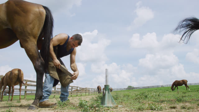 slow motion shot of a male farrier in his thirties using a rasp to file a brown horse's hoof outdoors in a pasture on a farm on a sunny day - ferro di cavallo accessorio per animali video stock e b–roll