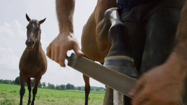 slow motion shot of a male farrier in his thirties using a rasp to file down a brown horse es hoof outdoors as another horse watches in a pasture on a farm on a sunny day - rancher stock-videos und b-roll-filmmaterial