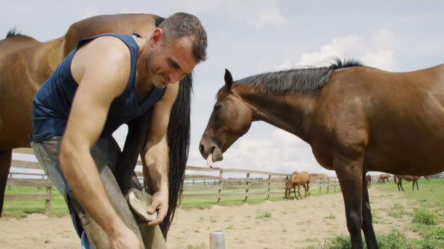 slow motion shot of a male farrier in his thirties using a rasp to file down a brown horse's hoof outdoors as another horse watches in a pasture on a farm on a sunny day - ferro di cavallo accessorio per animali video stock e b–roll