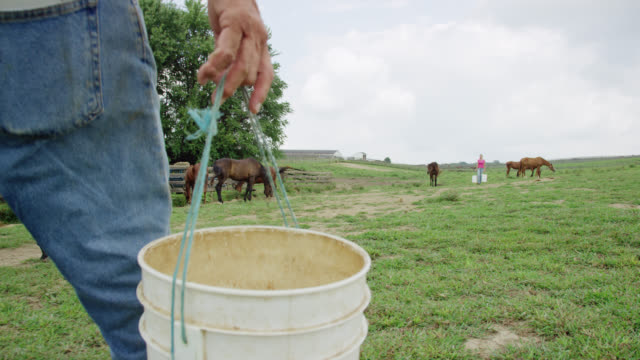 slow motion shot of a person carrying a five pound bucket in a pasture with grazing horses on a farm on a partly cloudy day - pasture stock videos & royalty-free footage