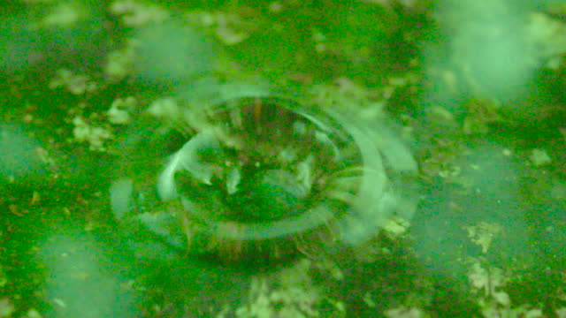 Slow motion shot of a raindrop falling on a patch of moss, Miyagi, Japan.