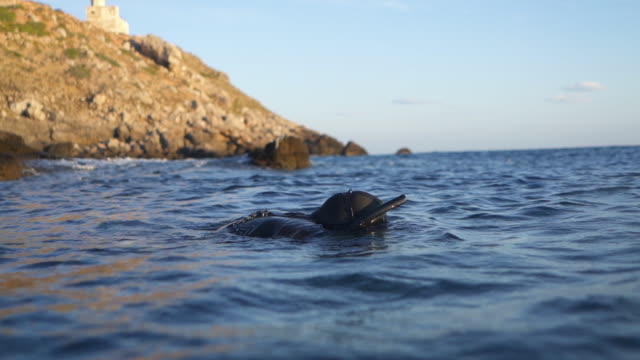 stockvideo's en b-roll-footage met langzaam motieschot van een duiker die boven water uitduikt - zwemvlies