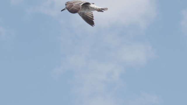 slow motion shot of a seagull flying - sea bird stock videos & royalty-free footage