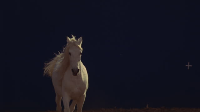 Slow motion shot of a white horse running in front of a blue screen.