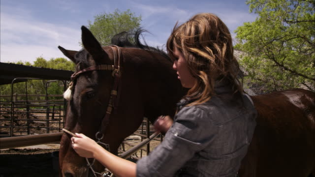 a slow motion shot of a woman adjusting a bridle. - bridle stock videos & royalty-free footage