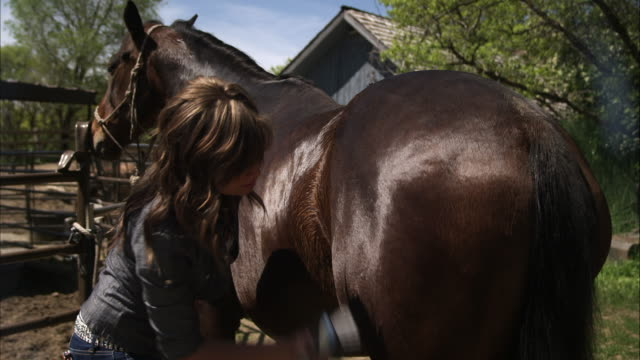 Slow motion shot of a woman brushing a horse.