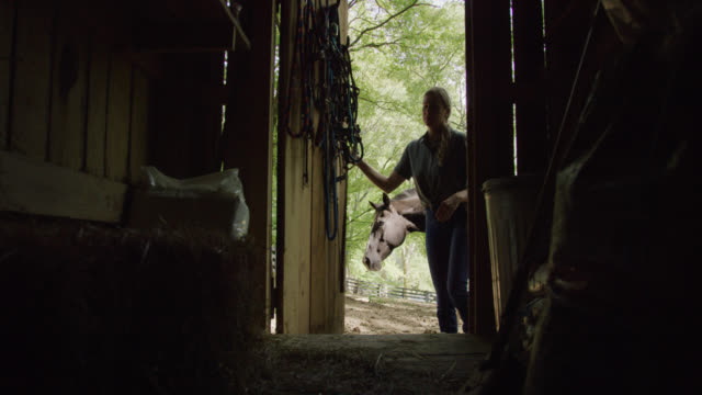 stockvideo's en b-roll-footage met slow motion shot of a woman in her forties in silhouette opening the door of a barn with her horse behind her on a sunny day - boerderijschuur