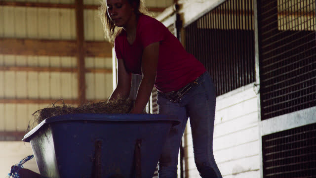 slow motion shot of a woman in her twenties picking up some hay from her wheelbarrow to feed animals in a barn on a farm - agricultural equipment stock videos & royalty-free footage