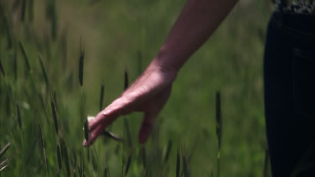 slow motion shot of a woman walking through tall grass. - mid section stock videos & royalty-free footage