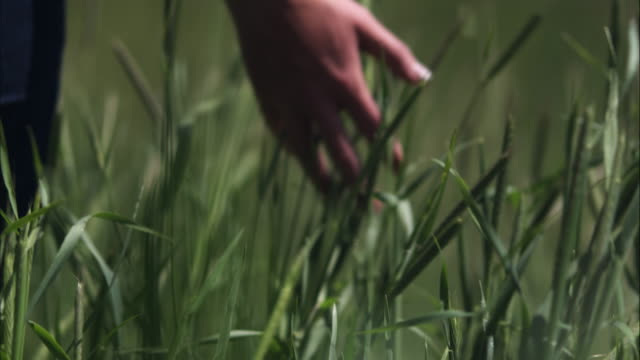 Slow motion shot of a woman's hand touching tall grass.