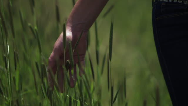 slow motion shot of a woman's hand touching tall grass. - gras stock-videos und b-roll-filmmaterial