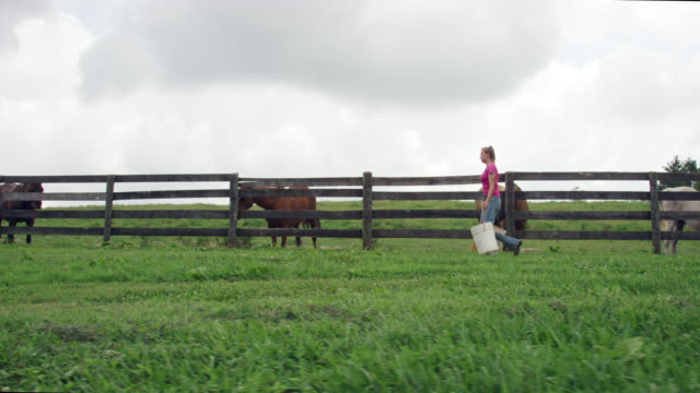 slow motion shot of a young woman in her twenties carrying five gallon buckets past horses in a fenced-in pasture on a farm on a partly cloudy day - pasture stock videos & royalty-free footage