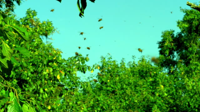 Slow motion shot of bees flying through the air.