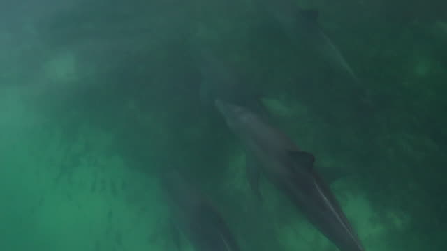 a slow motion shot of dolphins - bottle nosed dolphin stock videos & royalty-free footage