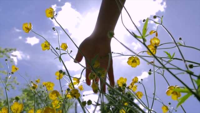slow motion shot of female hand touching yellow blossoms in beautiful flower field - affectionate stock videos & royalty-free footage