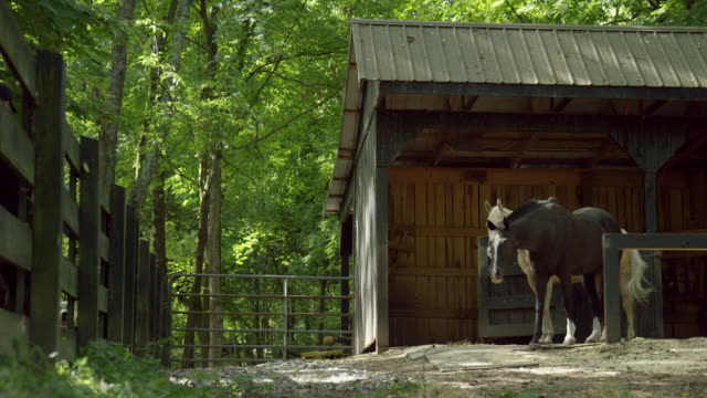 slow motion shot of horses next to a horse barn surrounded by a forest on a sunny day in tennessee - tennessee stock videos & royalty-free footage