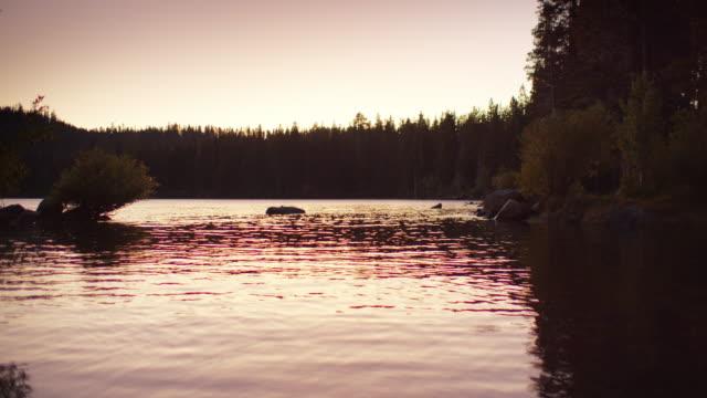 vidéos et rushes de tir lent de mouvement des insectes au-dessus du lac d'or, la californie - parc naturel