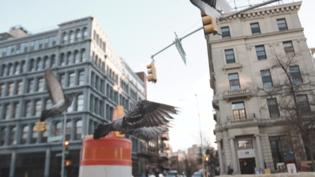 slow motion shot of pigeons flying through new york city streets - b roll stock videos & royalty-free footage