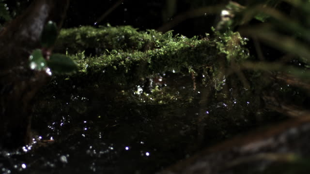 Slow motion shot of rain falling onto moss covered branches.