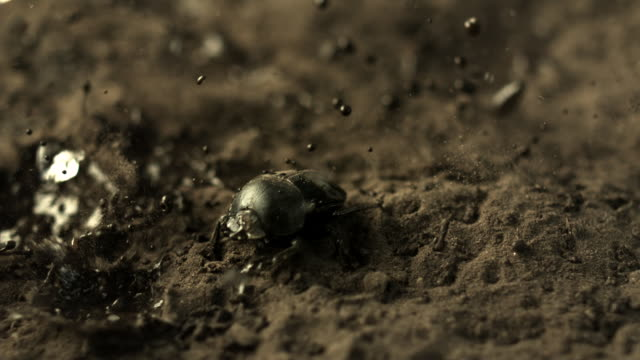 slow motion shot of raindrops falling onto a dung beetle. - splashing droplet stock videos & royalty-free footage