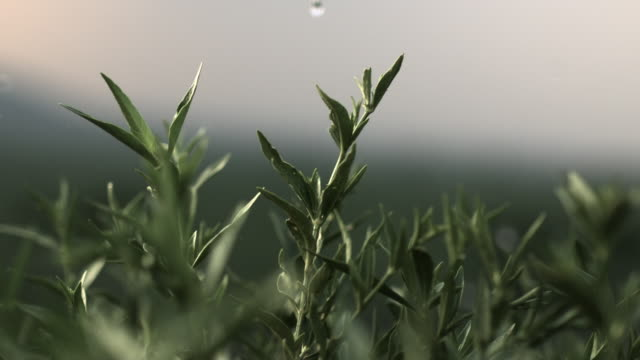 Slow motion shot of raindrops falling onto plants.