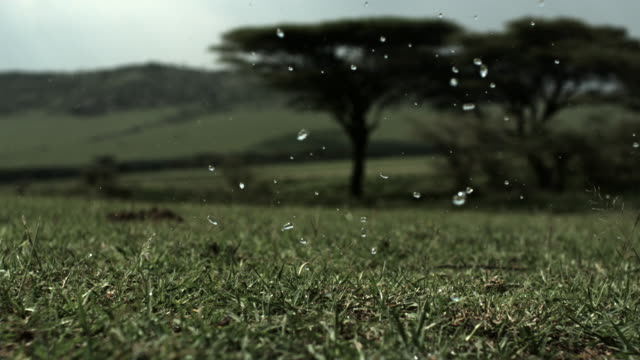 Slow motion shot of raindrops falling onto the plains of the Serengeti, Tanzania.