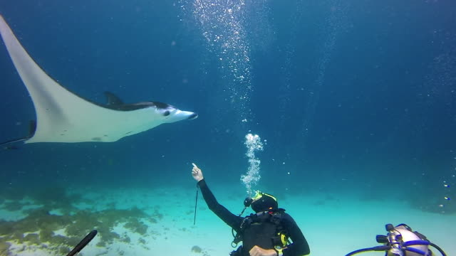 slow motion shot of scuba divers gesturing against manta ray while exploring in sea, people and marine life in ocean - nusa penida, bali - aqualung diving equipment stock videos & royalty-free footage