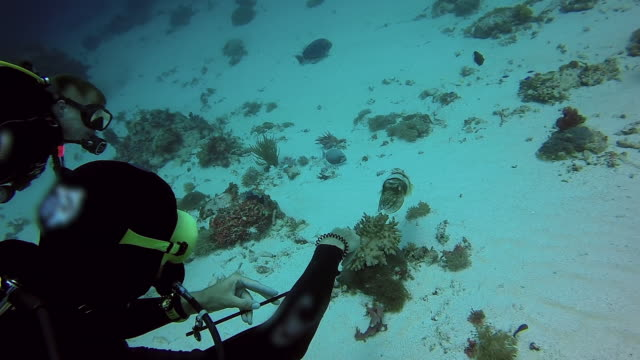 slow motion shot of scuba divers gesturing on cuttlefish over ocean floor, high angle view of people exploring underwater - nusa penida, bali - cuttlefish stock videos & royalty-free footage