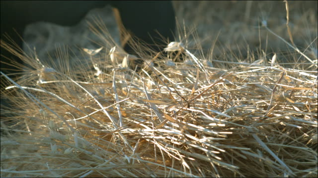 Slow motion shot of sheaves of wheat being collected from a field.