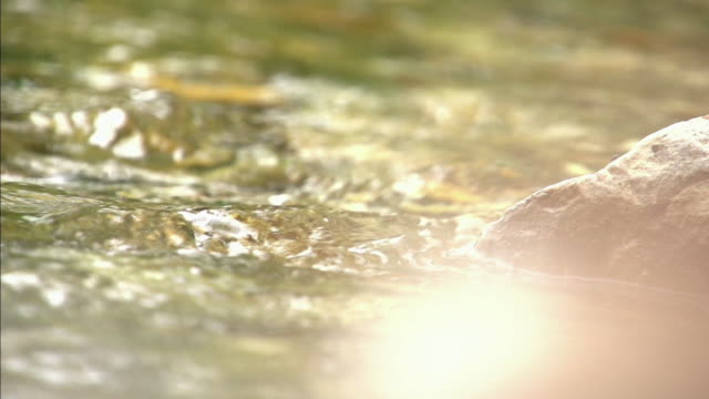 vídeos de stock e filmes b-roll de slow motion shot of sunlight reflecting off flowing water. - efeito de luz