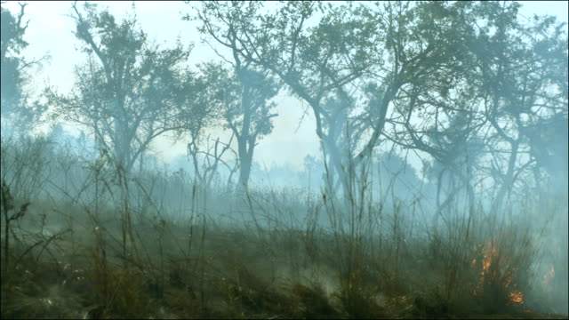 Slow motion shot of the aftermath of a bush fire at the Kruger National Park, South Africa.